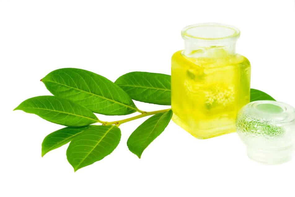 Tea oil in glass bottle