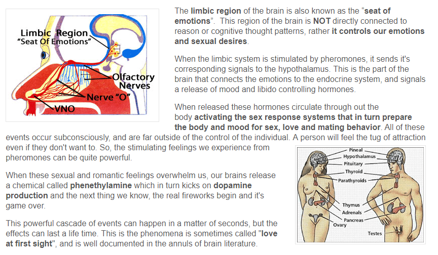 brain is the center of seduction!